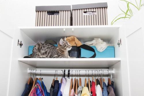 クローゼットに入る猫の写真