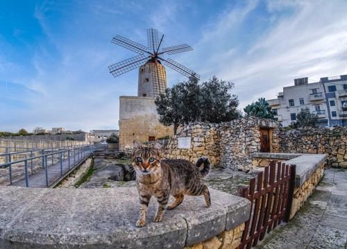 塀の上を散歩する猫