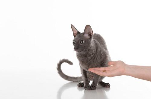 食べない猫