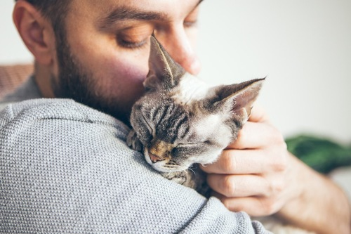 抱っこされて目を閉じる猫