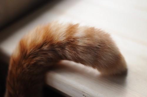 上向きの猫の尻尾