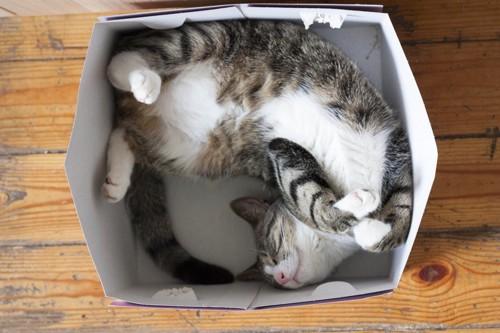 箱の中で器用に眠る猫