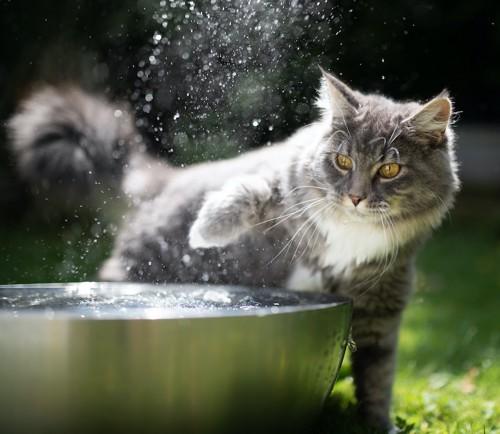 水に手を入れて驚く猫