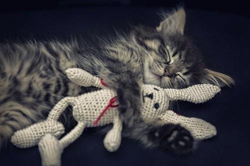 ぬいぐるみを抱きしめて眠る猫
