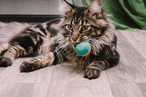 おもちゃを咥える猫