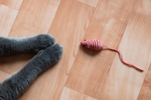 猫の手とネズミのおもちゃ