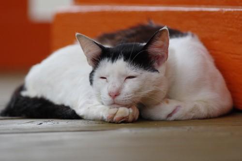 手に顎を乗せて寝る猫