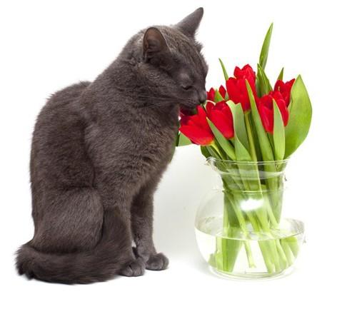 猫と花瓶に生けられた花