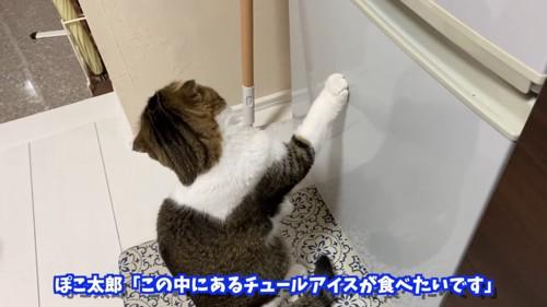 冷蔵庫にタッチする猫