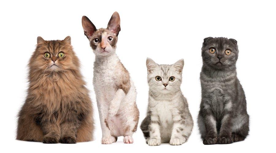 並んで座る種類の違う4匹の猫