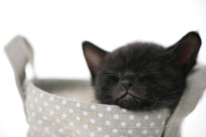 子猫の黒猫