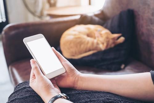 スマートフォンを操作する人とソファーでくつろぐ猫