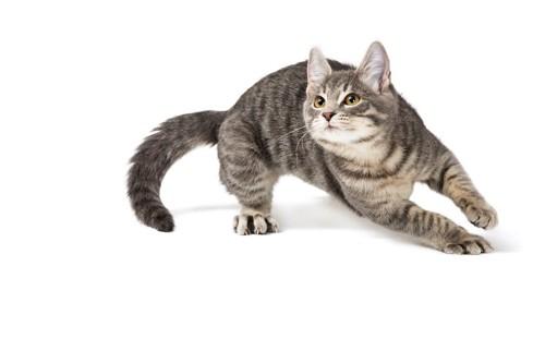 上を見ながら走り出す猫