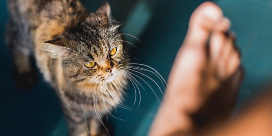 不機嫌な表情で人の足を狙う猫