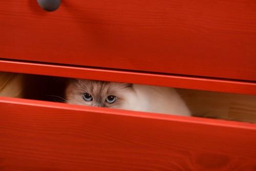 引き出しの中で上目遣いの猫