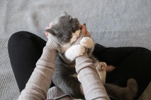 飼い主の膝の上で手にじゃれつく猫