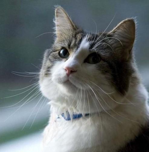 不思議な能力を持つ猫オスカー