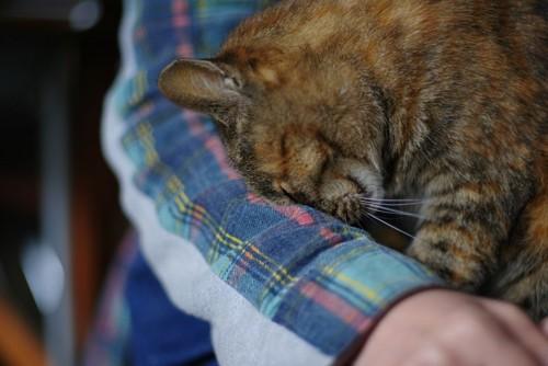 人の腕に顔をこすりつける猫