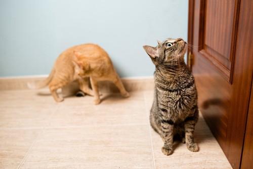 ドアの前で飼い主を待つ猫