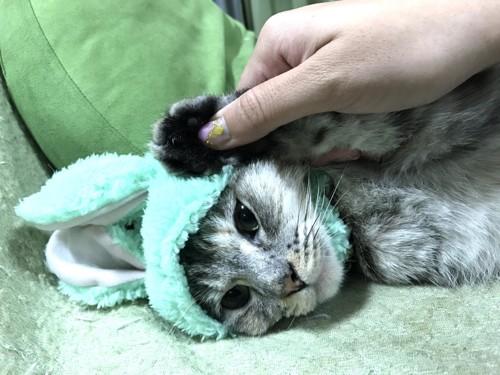 緑うさぎのかぶりもの、猫1匹