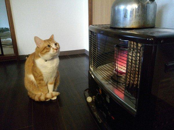 ストーブの前に座る猫