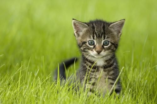 草むらに居る子猫