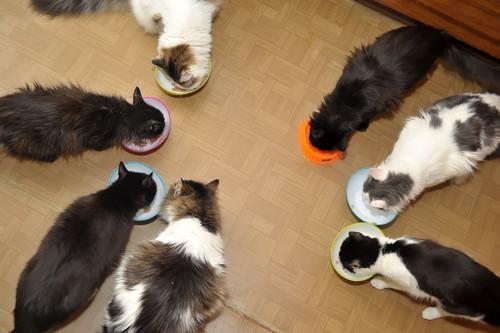 ご飯中の猫たち