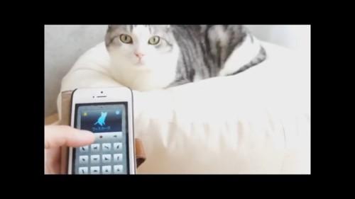 猫語翻訳機アプリを使う