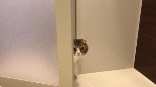 ドアの隙間から顔を出す猫