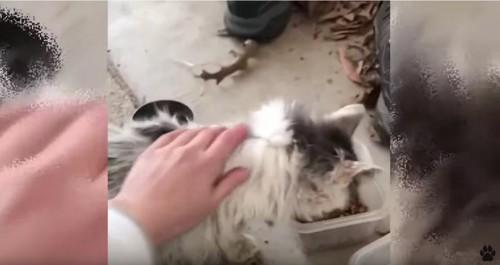 エサを食べる猫と女性の手