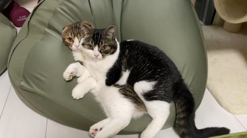 クッションで寝る猫に乗る猫