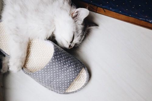 スリッパを抱いて寝る猫