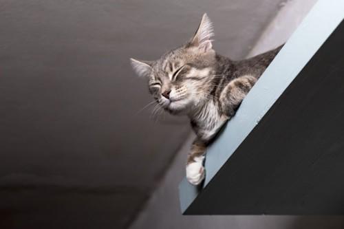 壁に取り付けたベッドから見下ろす猫
