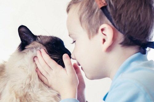 鼻を近づける猫