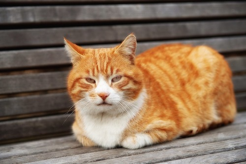 ベンチの上で香箱座りをする猫