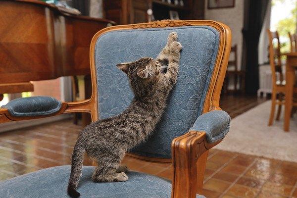 椅子に爪をとぐ猫
