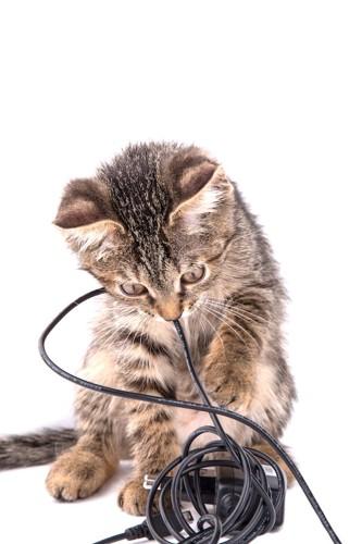 コンセントのコードで遊ぶ子猫