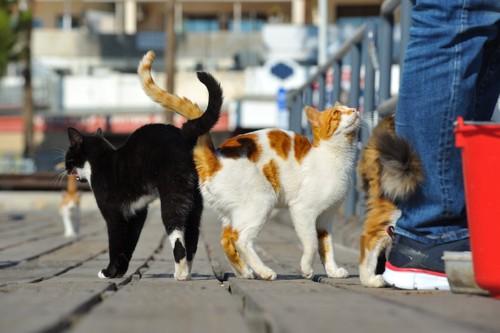 人に集まる野良猫たち