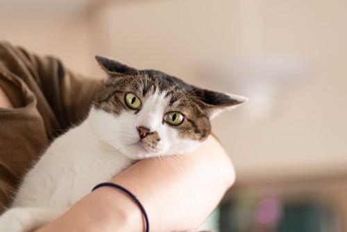 抱かれて嫌がる猫