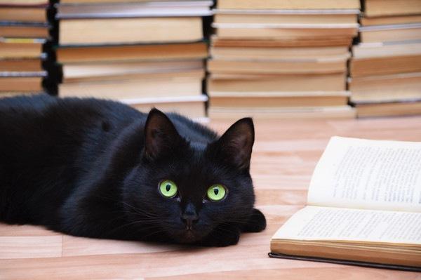 黒猫と本の山