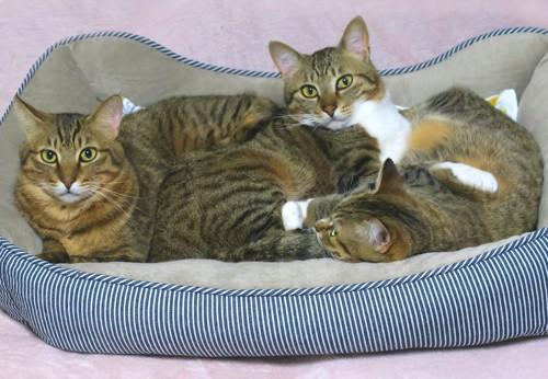 お気に入りの寝床でくつろぐ猫たち