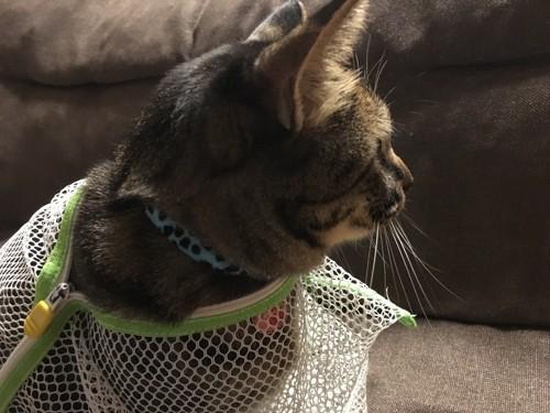 洗濯ネットから顔を出す猫
