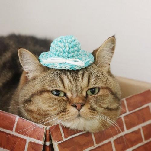 #トラ 帽子2#