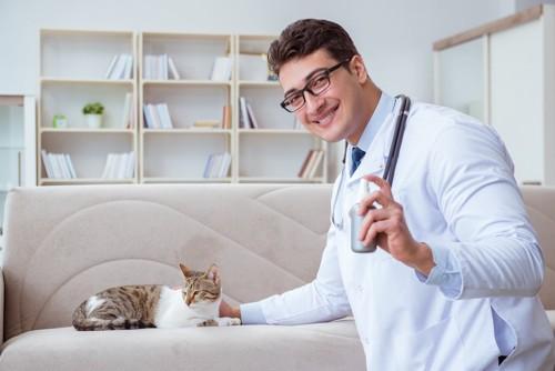 スプレーを持つドクターとソファーでくつろぐ猫
