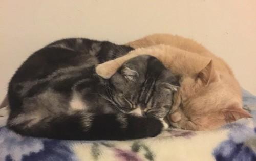 寝ている2匹