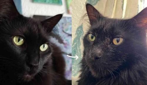 黒猫の比較写真