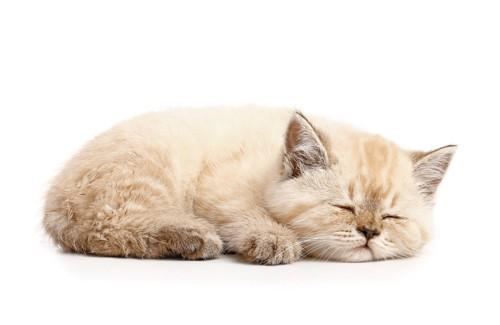 疲れた様子の子猫