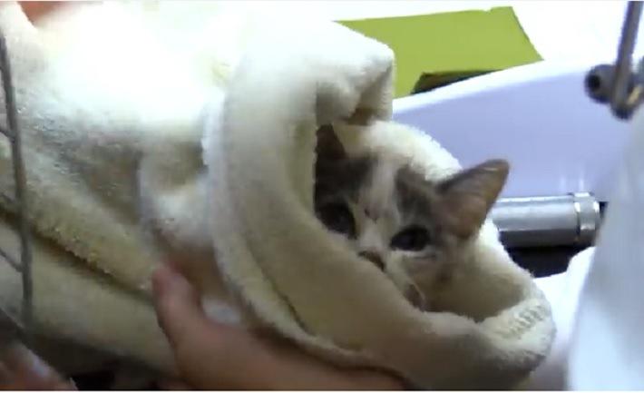 タオルにくるまれた子猫
