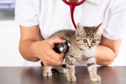 聴診器を当てられる子猫