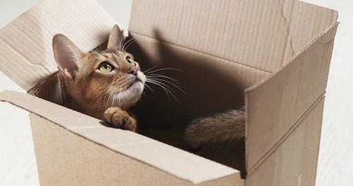 思わず段ボール箱に入っちゃった猫